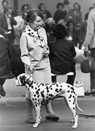Những bức ảnh đen trắng hiếm có về Dog Show ở Anh giữa thế kỷ 20 - Ảnh 3.