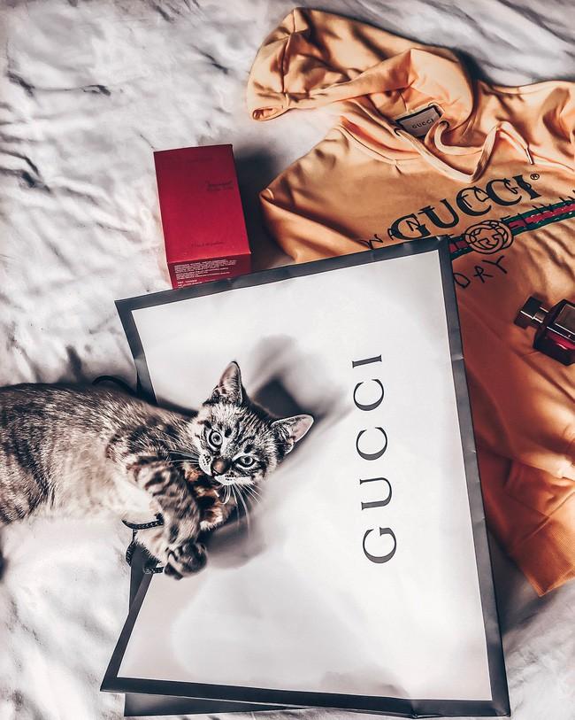 Bà mẹ sòng phẳng của năm: Lấy áo Gucci 7 triệu của con lót ổ mèo, xong đền 100k bảo ra chợ mua mới - Ảnh 4.
