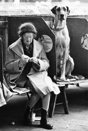 Những bức ảnh đen trắng hiếm có về Dog Show ở Anh giữa thế kỷ 20 - Ảnh 4.