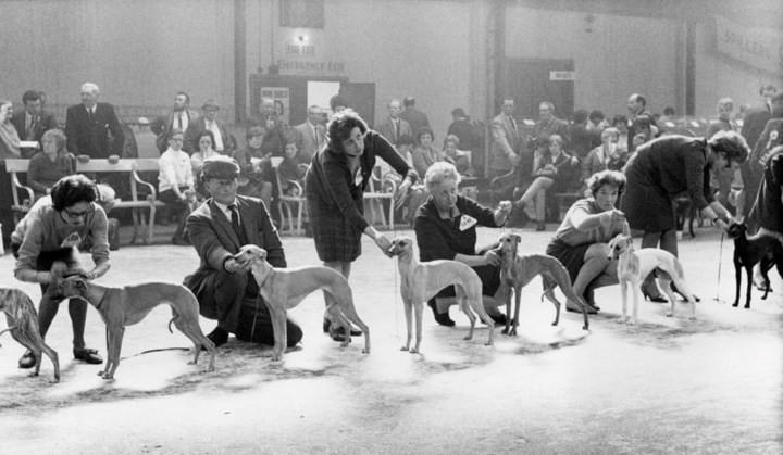 Những bức ảnh đen trắng hiếm có về Dog Show ở Anh giữa thế kỷ 20 - Ảnh 6.