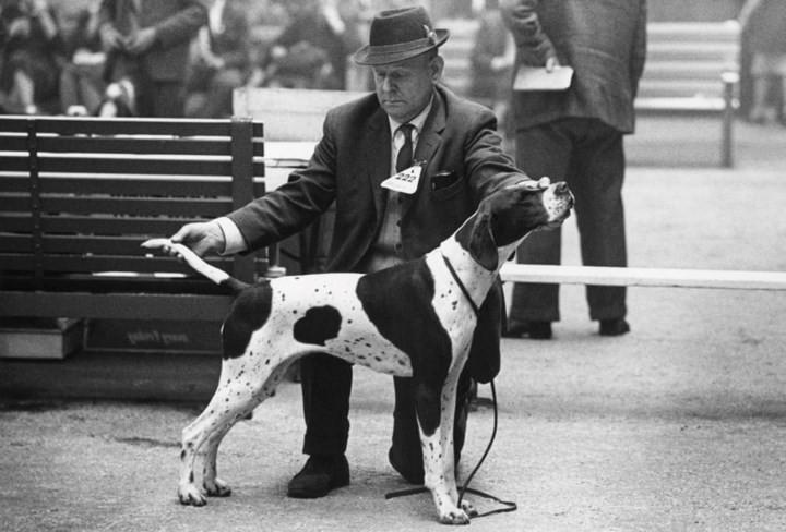 Những bức ảnh đen trắng hiếm có về Dog Show ở Anh giữa thế kỷ 20 - Ảnh 7.