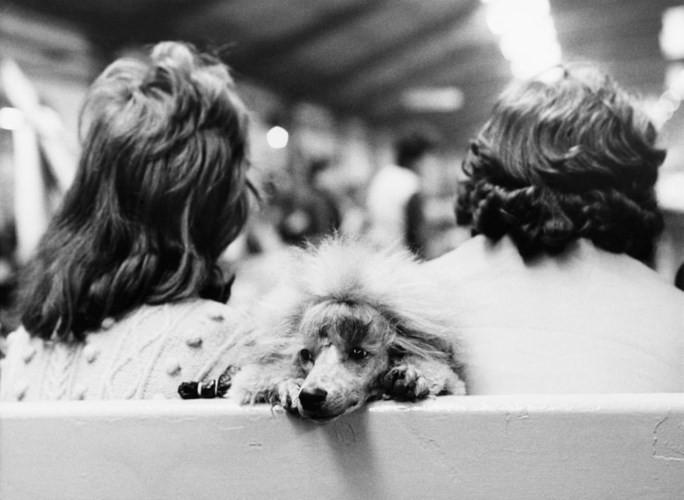 Những bức ảnh đen trắng hiếm có về Dog Show ở Anh giữa thế kỷ 20 - Ảnh 8.