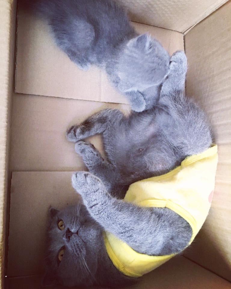 """Bị cộng đồng Hutech truy tìm vì ôm mèo của chủ quán nước về nhà, nam sinh giải thích: """"Tưởng mèo hoang nên đem về rồi tìm chủ trả lại"""""""