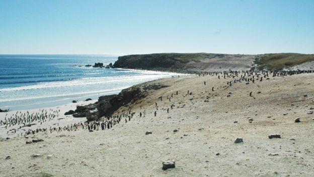 Quá mệt mỏi với bè lũ chim cánh cụt cùng 6000 con cừu, gia đình người Anh rao bán cả hòn đảo tặng kèm mọi con vật trên đó - Ảnh 3.
