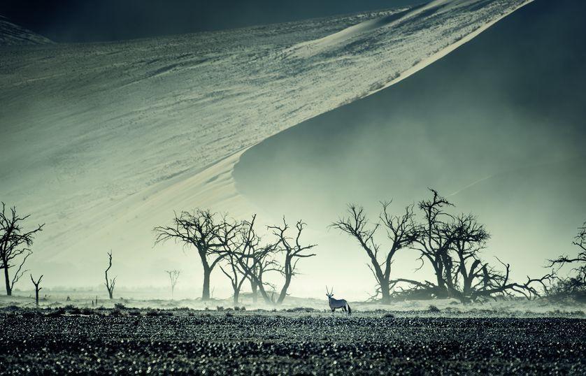 Những bức ảnh chứng minh rằng thiên nhiên hoang dã và toàn vẹn vẫn đang tồn tại trên Trái đất này - Ảnh 1.