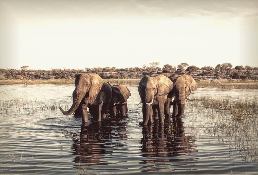 Những bức ảnh chứng minh rằng thiên nhiên hoang dã và toàn vẹn vẫn đang tồn tại trên Trái đất này - Ảnh 12.