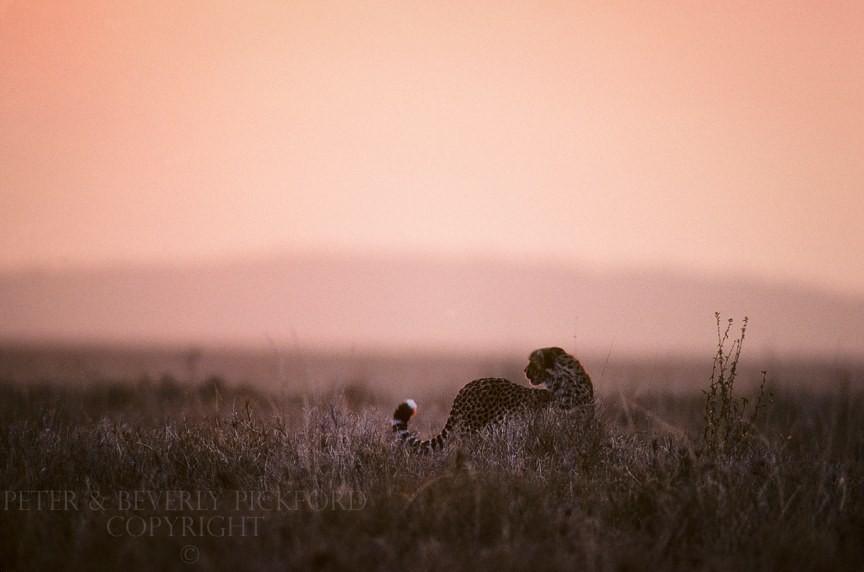 Những bức ảnh chứng minh rằng thiên nhiên hoang dã và toàn vẹn vẫn đang tồn tại trên Trái đất này - Ảnh 10.