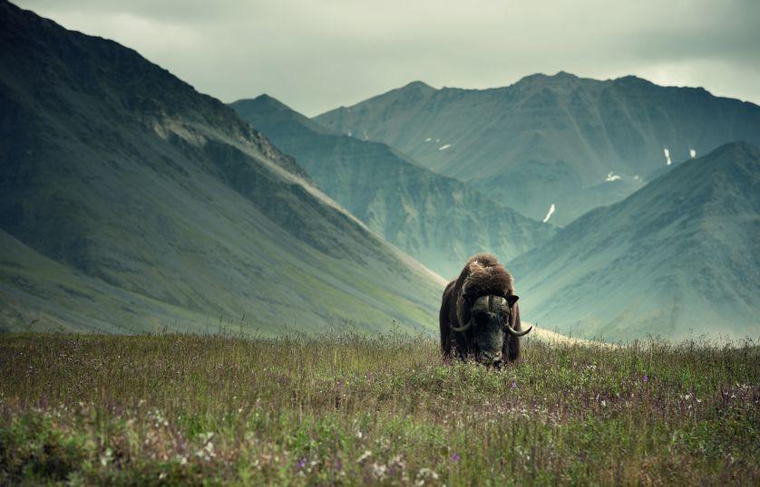 Những bức ảnh chứng minh rằng thiên nhiên hoang dã và toàn vẹn vẫn đang tồn tại trên Trái đất này - Ảnh 2.
