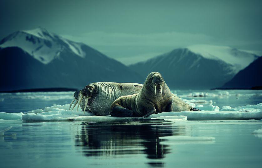 Những bức ảnh chứng minh rằng thiên nhiên hoang dã và toàn vẹn vẫn đang tồn tại trên Trái đất này - Ảnh 3.