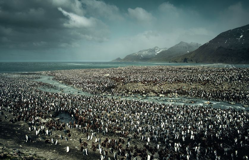 Những bức ảnh chứng minh rằng thiên nhiên hoang dã và toàn vẹn vẫn đang tồn tại trên Trái đất này - Ảnh 5.