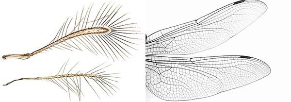 Nếu biết cọng lông này thực sự là gì và chức năng của nó, bạn sẽ thấy thiên nhiên có thể kỳ lạ đến thế nào - Ảnh 4.