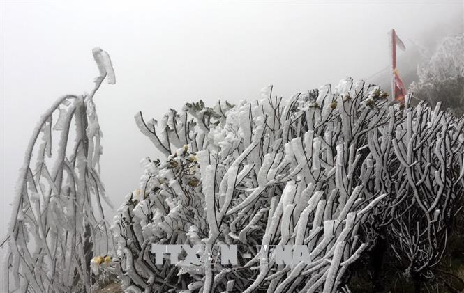 Từ ngày 29/12, vùng núi cao Bắc Bộ khả năng xảy ra băng giá và mưa tuyết - Ảnh 1.