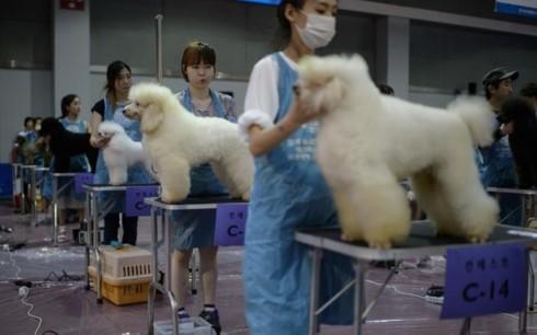 Hàn Quốc thay đổi mạnh thái độ với nghề thịt chó và thói quen ăn chó - Ảnh 3.