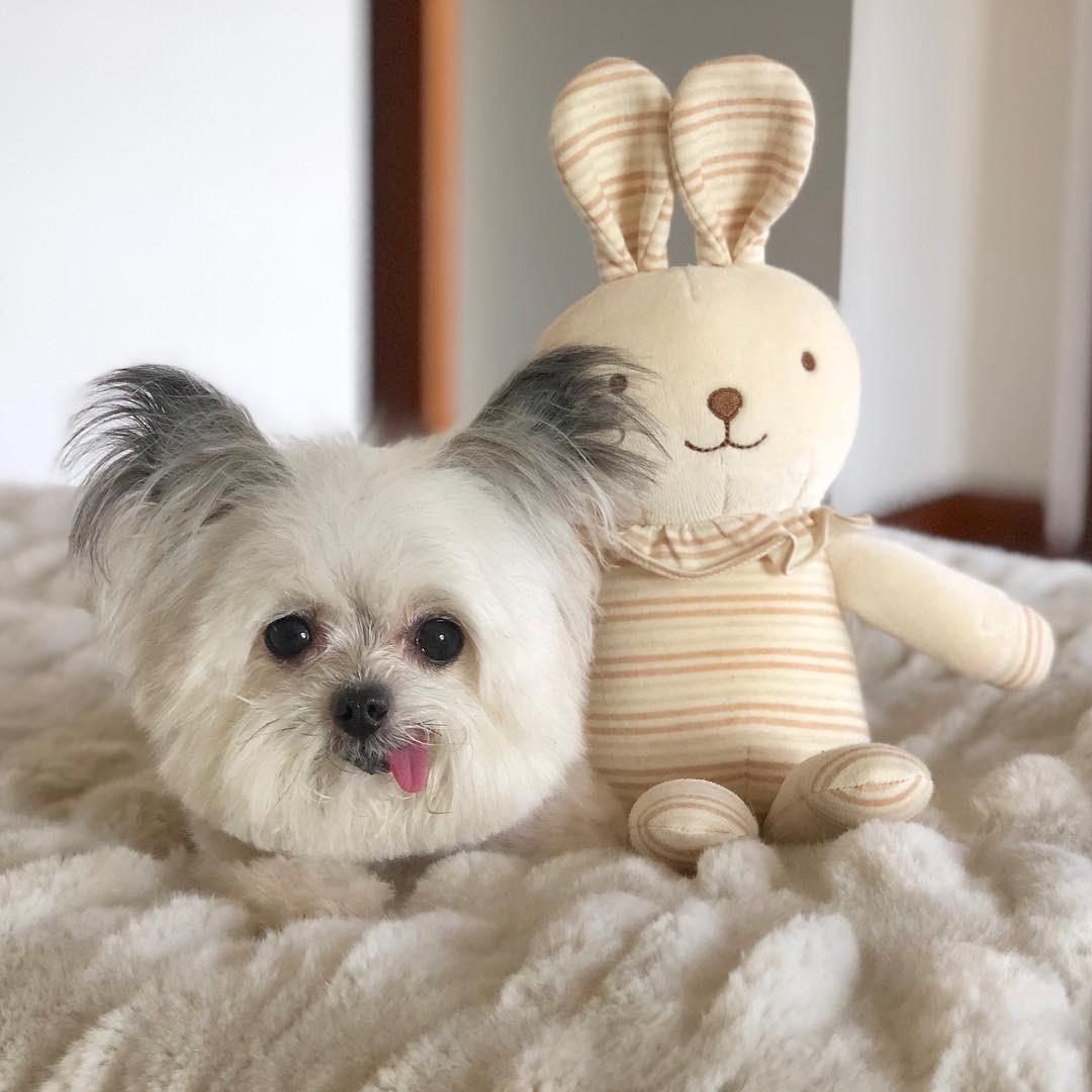 Norbert - chú chó hot Instagram dùng sự cute vô đối chữa lành vết thương tâm hồn cho mọi người - Ảnh 8.