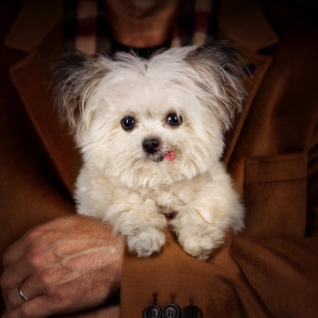 Norbert - chú chó hot Instagram dùng sự cute vô đối chữa lành vết thương tâm hồn cho mọi người - Ảnh 5.