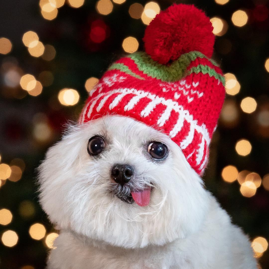 Norbert - chú chó hot Instagram dùng sự cute vô đối chữa lành vết thương tâm hồn cho mọi người - Ảnh 3.