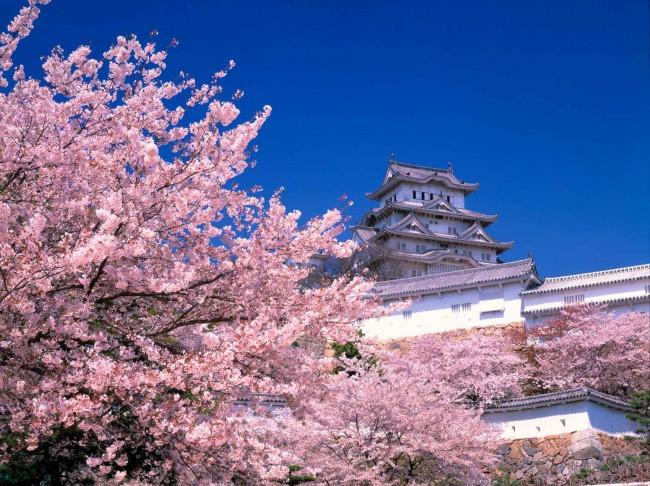Những điều khác biệt của nền giáo dục Nhật Bản khiến cả thế giới nghiêng mình kính phục - Ảnh 7.