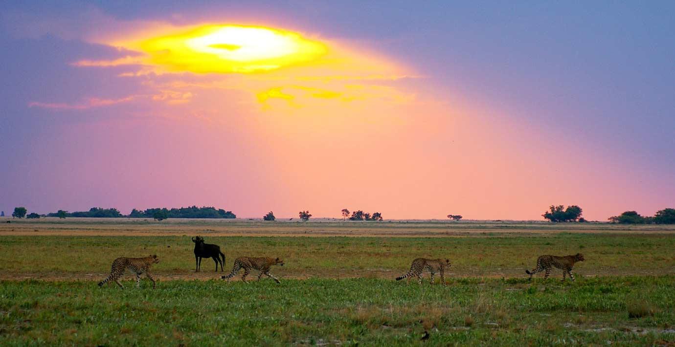 Ghé thăm vùng đất lý tưởng cho các nhiếp ảnh gia thiên nhiên hoang dã: Quê hương của một con sư tử huyền thoại - Ảnh 3.