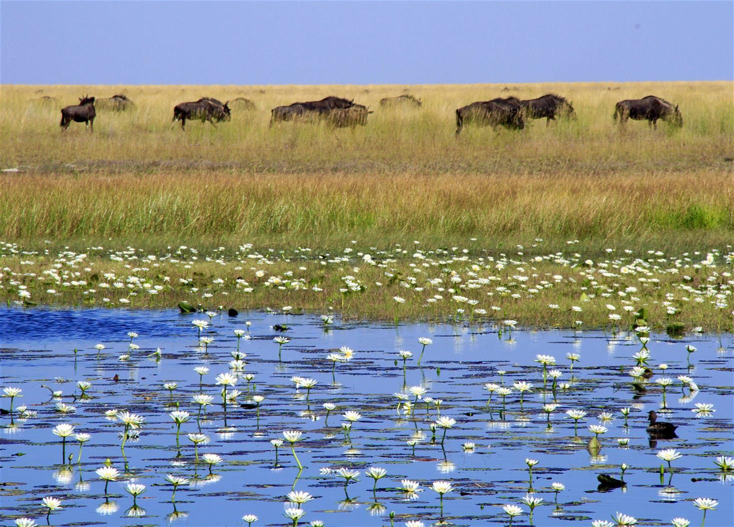 Ghé thăm vùng đất lý tưởng cho các nhiếp ảnh gia thiên nhiên hoang dã: Quê hương của một con sư tử huyền thoại - Ảnh 1.