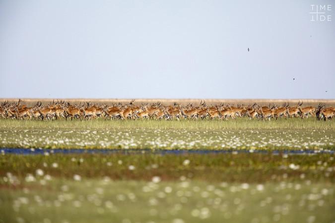 Ghé thăm vùng đất lý tưởng cho các nhiếp ảnh gia thiên nhiên hoang dã: Quê hương của một con sư tử huyền thoại - Ảnh 4.