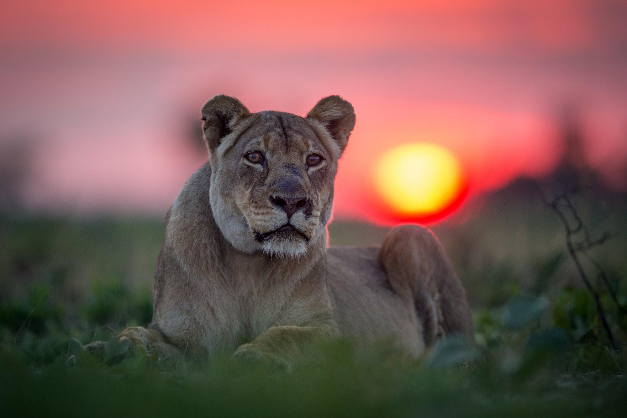 Ghé thăm vùng đất lý tưởng cho các nhiếp ảnh gia thiên nhiên hoang dã: Quê hương của một con sư tử huyền thoại - Ảnh 7.