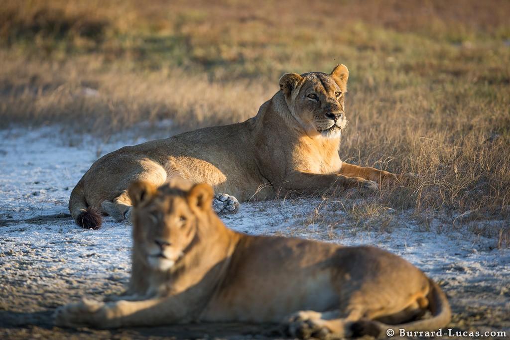 Ghé thăm vùng đất lý tưởng cho các nhiếp ảnh gia thiên nhiên hoang dã: Quê hương của một con sư tử huyền thoại - Ảnh 8.