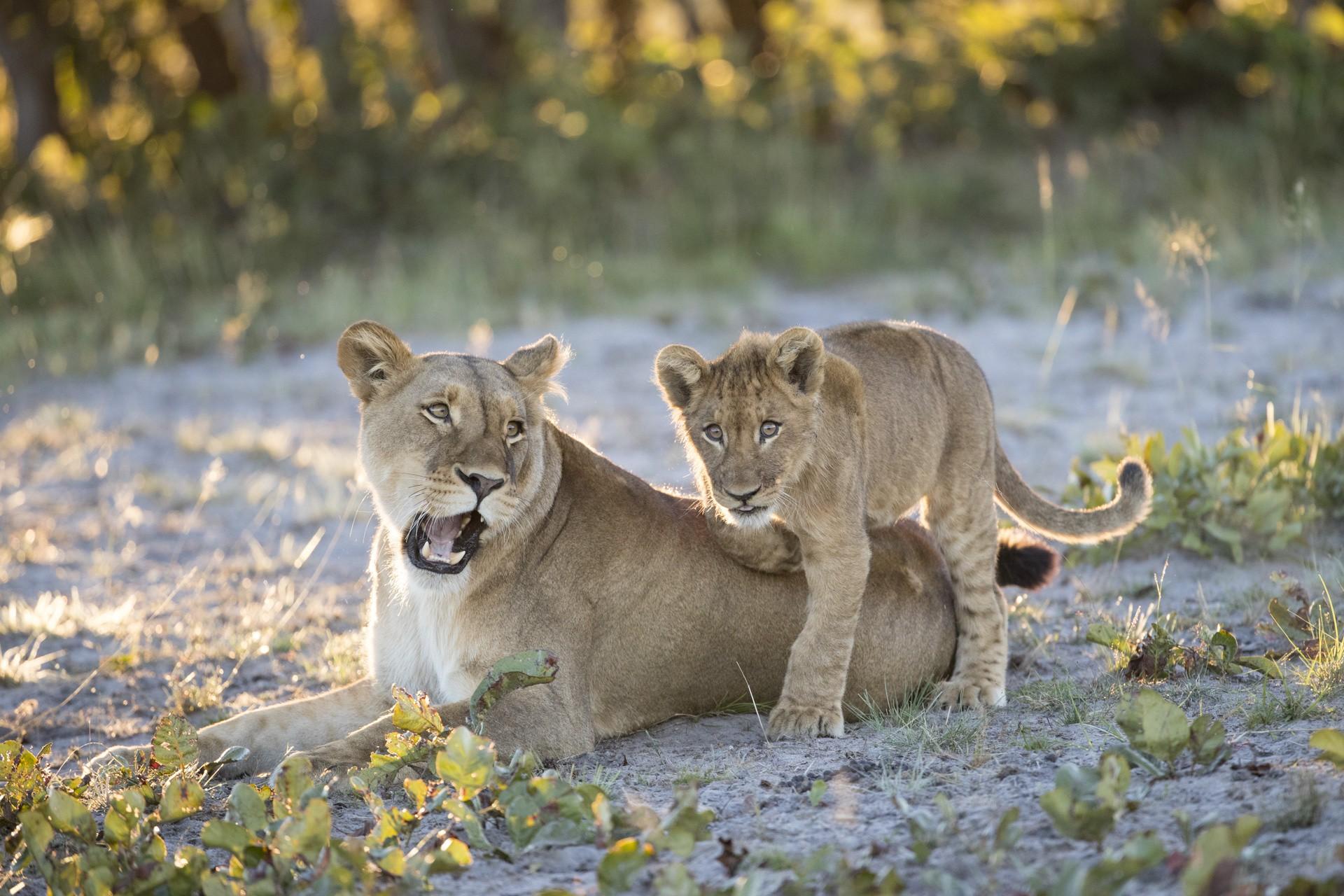 Ghé thăm vùng đất lý tưởng cho các nhiếp ảnh gia thiên nhiên hoang dã: Quê hương của một con sư tử huyền thoại - Ảnh 9.