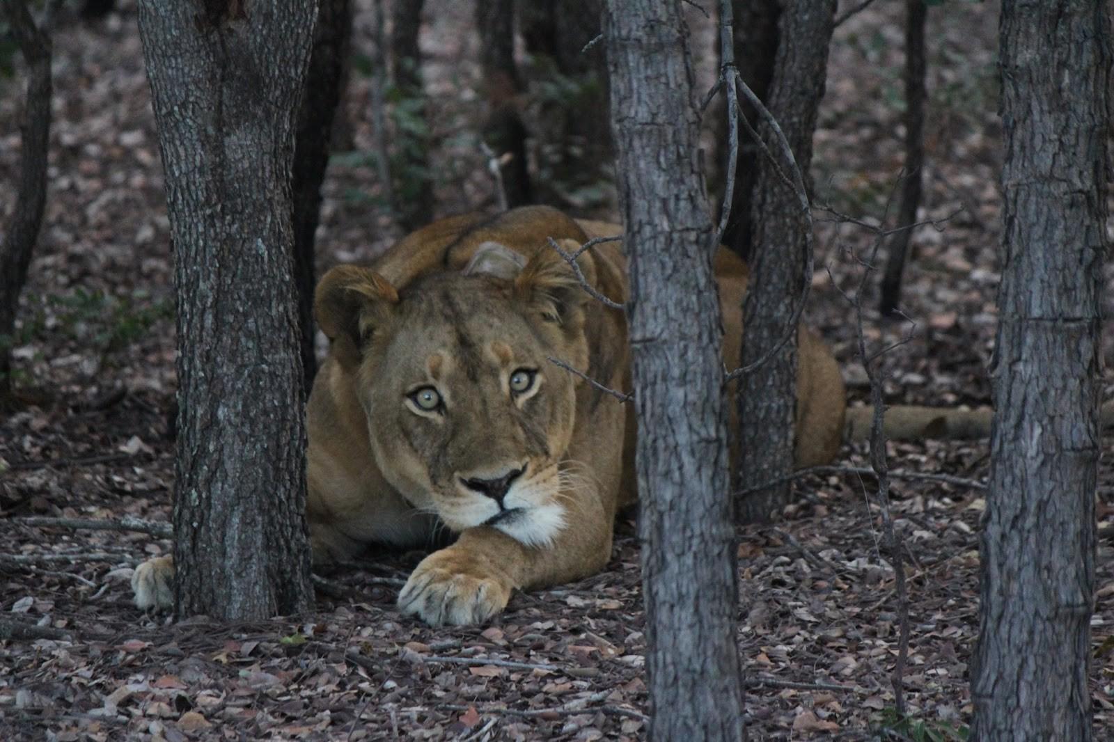 Ghé thăm vùng đất lý tưởng cho các nhiếp ảnh gia thiên nhiên hoang dã: Quê hương của một con sư tử huyền thoại - Ảnh 10.