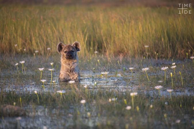 Ghé thăm vùng đất lý tưởng cho các nhiếp ảnh gia thiên nhiên hoang dã: Quê hương của một con sư tử huyền thoại - Ảnh 13.