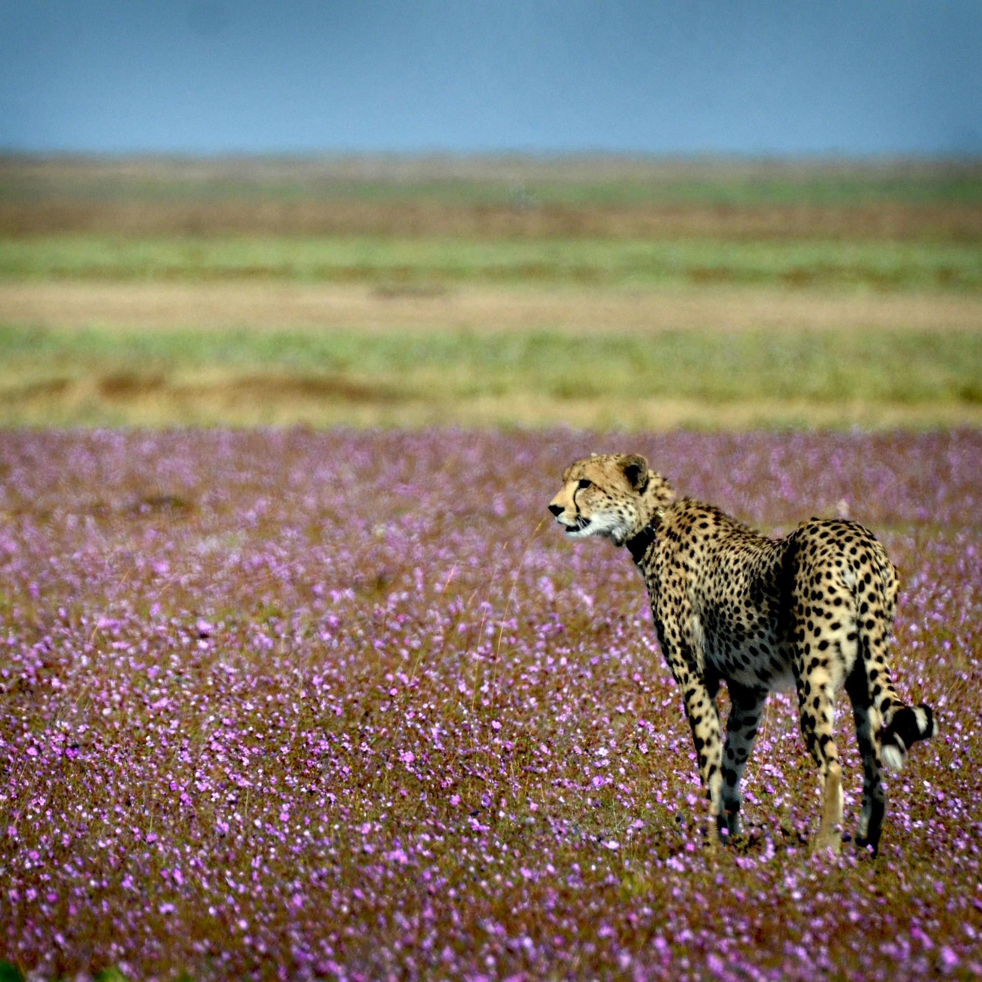 Ghé thăm vùng đất lý tưởng cho các nhiếp ảnh gia thiên nhiên hoang dã: Quê hương của một con sư tử huyền thoại - Ảnh 12.