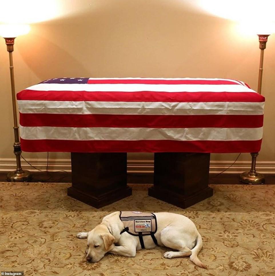 Hình Ảnh Chú Chó Buồn Bã Nằm Canh Trước Linh Cữu Cố Tổng Thống George H.W
