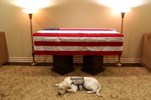 Chú chó trung thành của cố Tổng thống Bush sẽ nhận nhiệm vụ mới - Ảnh 1.
