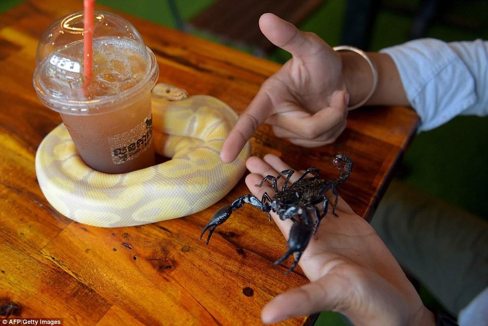 Quán cà phê ở Campuchia gây cảm giác mạnh cho thực khách khi thả cả... rắn, bọ cạp lẫn cự đà xung quanh quán - Ảnh 5.