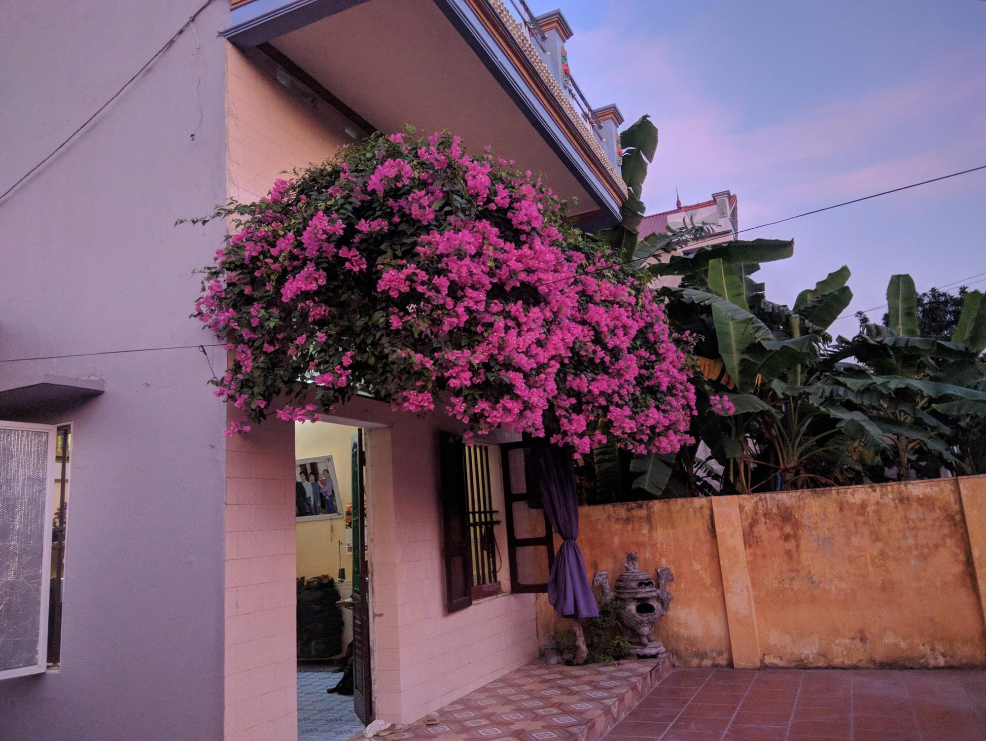Thanh niên khoe căn nhà xinh có giàn hoa giấy 20 năm tuổi đẹp nức lòng cư dân mạng - Ảnh 2.