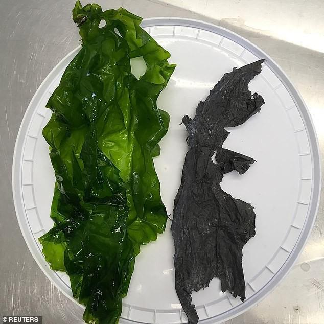 Bức hình này sẽ giúp bạn hiểu tại sao nói Rác nhựa đang khiến cả đại dương mắc nghẹn - Ảnh 2.