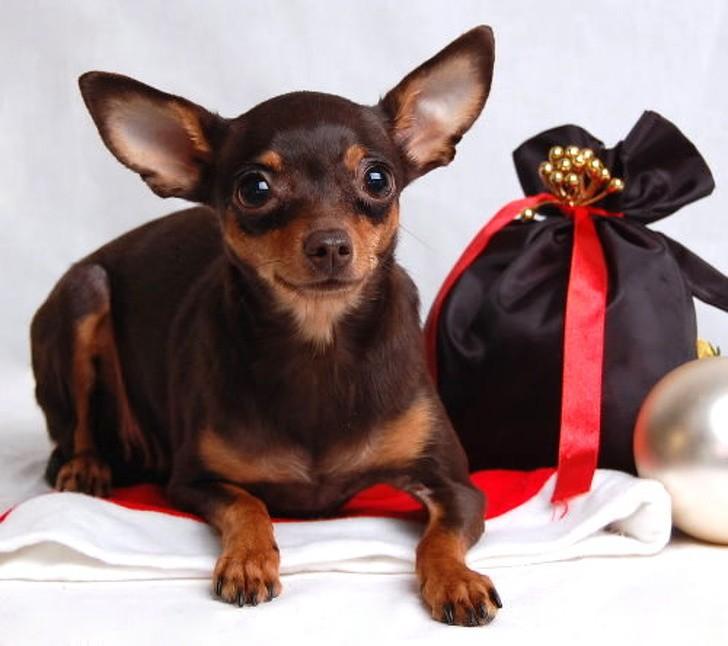9 giống chó sở hữu vẻ ngoài siêu cưng nhưng không thích hợp với các gia đình có trẻ nhỏ - Ảnh 3.