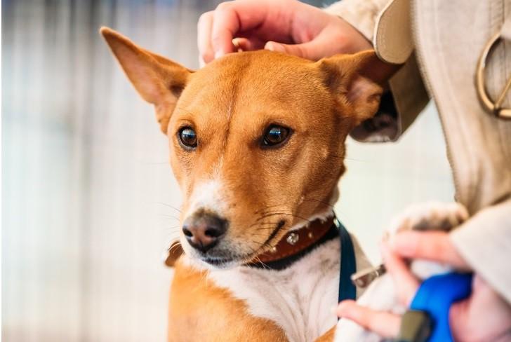 9 giống chó sở hữu vẻ ngoài siêu cưng nhưng không thích hợp với các gia đình có trẻ nhỏ - Ảnh 9.
