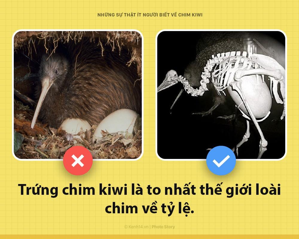 Xin chào! Tôi là chim kiwi biểu tượng của New Zealand và tôi dị hơn các ông tưởng nhiều đấy - Ảnh 2.