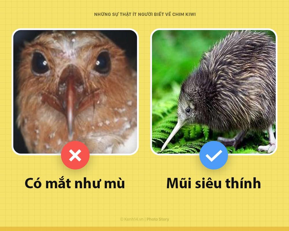 Xin chào! Tôi là chim kiwi biểu tượng của New Zealand và tôi dị hơn các ông tưởng nhiều đấy - Ảnh 3.