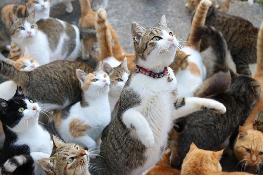 Đằng sau những con mèo bị bấm cụt tai là câu chuyện cảm động về cách người Nhật đối xử với chúng - Ảnh 1.