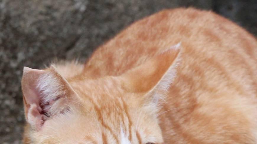 Đằng sau những con mèo bị bấm cụt tai là câu chuyện cảm động về cách người Nhật đối xử với chúng - Ảnh 2.