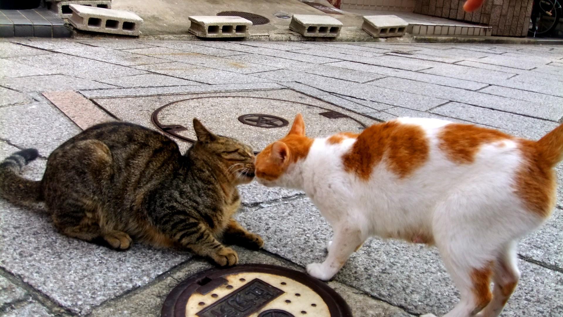 Đằng sau những con mèo bị bấm cụt tai là câu chuyện cảm động về cách người Nhật đối xử với chúng - Ảnh 3.