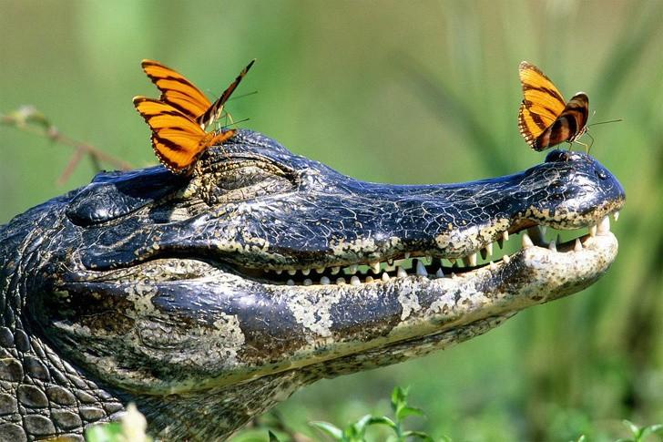 Tan chảy với loạt ảnh về tình yêu mù quáng của các con vật không cùng giống loài - Ảnh 7.
