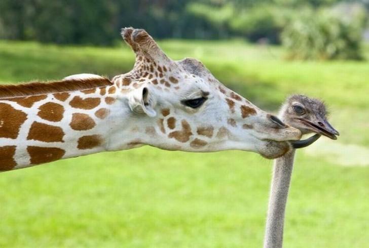 Tan chảy với loạt ảnh về tình yêu mù quáng của các con vật không cùng giống loài - Ảnh 10.