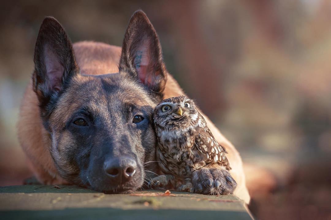 Tan chảy với loạt ảnh về tình yêu mù quáng của các con vật không cùng giống loài - Ảnh 2.