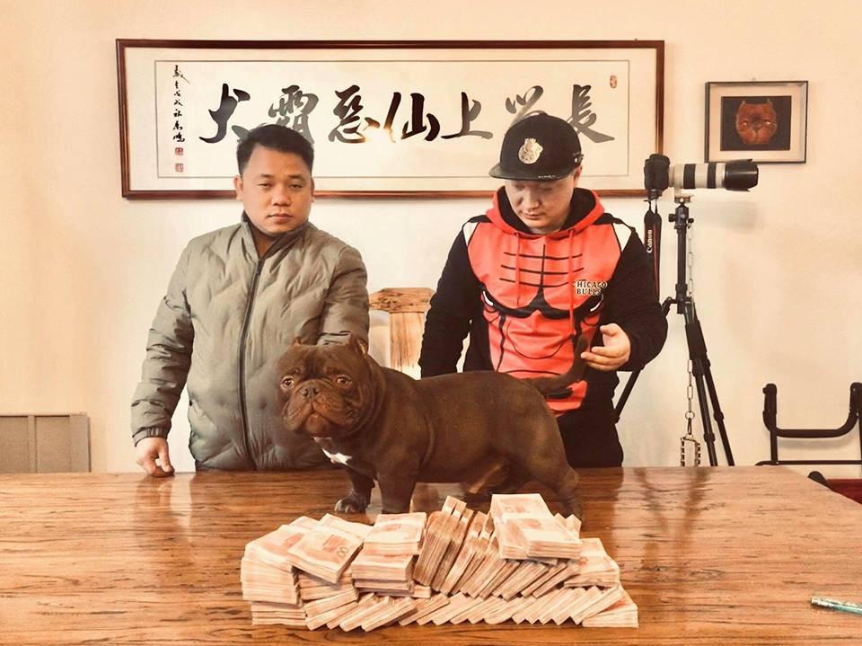 Thanh niên Việt rút 2,6 tỷ trong ngân hàng, lặn lội sang nước ngoài để mua bằng được chú chó mình yêu thích - Ảnh 1.