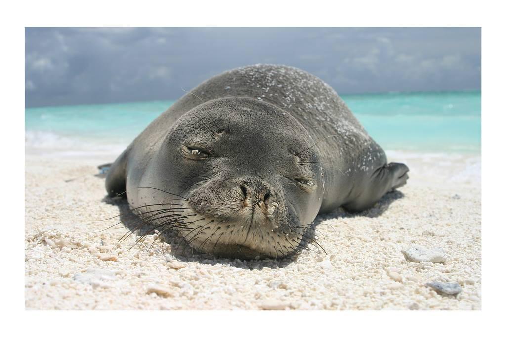 Chú hải cẩu số nhọ được dân mạng khen ngầu dữ dội khi bị lươn chui vào lủng lẳng trên mũi - Ảnh 2.