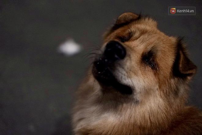 Điều kỳ diệu đã xuất hiện: Chú chó mù trở về bên anh đánh giày câm sau hơn nửa tháng mất tích - Ảnh 1.