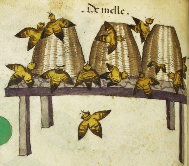 Người Trung Cổ từng tin có người tí hon sống trong tinh trùng của nam giới, ong là 1 loài chim đấy! - Ảnh 3.