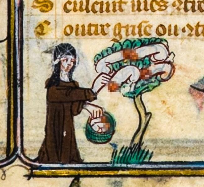 Người Trung Cổ từng tin có người tí hon sống trong tinh trùng của nam giới, ong là 1 loài chim đấy! - Ảnh 2.